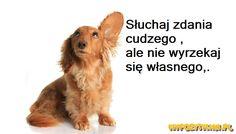 My Pozytywni - Energia, Uśmiech, Humor Ale, Motto, Corgi, Polish, Animals, Kids, Animales, Enamel, Animaux