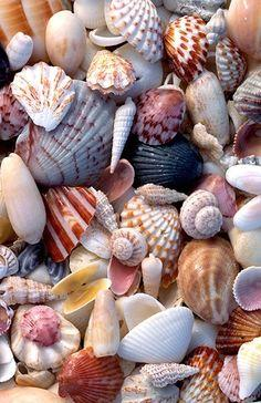 The hunt for the perfect shell on the beach -  I have so many pairs of these that are used in matching and sorting activities in a Montessori school.  I keep them in a beautiful shell covered box with a folded piece of felt for laying them out.