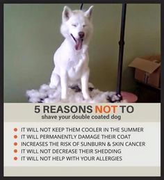 I can't stress this enough. Don't do it. Just don't. It causes your dog unnecessary discomfort.