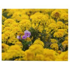 Stand Out in the Crowd Jigsaw Puzzles