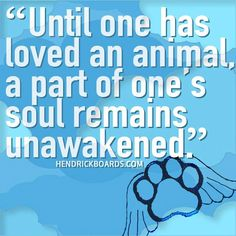 """Until one has loved an animal, a part of one's soul remains unawakened."" HendrickBoards.com"