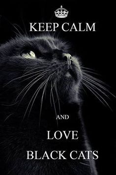 Black cats are blessing! Love all cats! Pretty Cats, Beautiful Cats, Animals Beautiful, Crazy Cat Lady, Crazy Cats, I Love Cats, Cool Cats, Cat Quotes, Qoutes