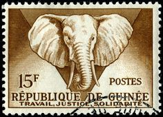 Pic: http://i1181.photobucket.com/albums/x424/nethryk/Volume 11/DLRGuinea-185-Elephant-6-15-59_zpsd8cd4181.jpg