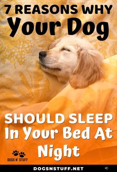 Dog Training Chewing Here are the top benefits of letting your dog sleep with you in the night! Training Chewing Here are the top benefits of letting your dog sleep with you in the night! Dog Training Tips, Training Classes, Training Pads, Training Academy, Potty Training, Agility Training, Training Exercises, Training School, Training Schedule