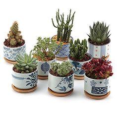 T4U 7.5CM Ceramic Japanese Style Serial Sucuulent Plant Pot/Cactus Plant Pot Flower Pot/Container/Planter Full colors Package 1 Pack of 8