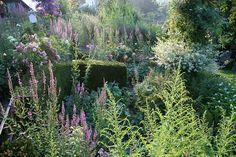 Stauden im Garten bringen viel Farbe und sind genügsam. Perfekt für Garten-Anfänger.