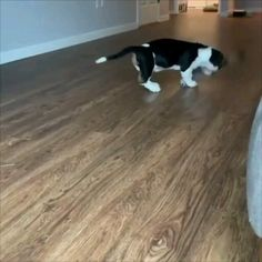 Funny puppy video funny dog video funny pets video the music makes it funny animals puppy doglovers cutepuppy cutedogs s luchtstroom naar voor Funny Animal Memes, Funny Animal Videos, Funny Animal Pictures, Cute Funny Animals, Cute Baby Animals, Funny Dogs, Animals And Pets, Funny Babies, Cute Puppies