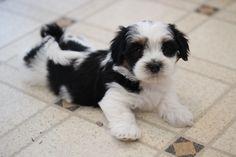 Love this cutie!  www.babybarks.ca