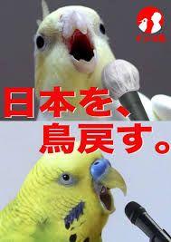 「鳥 もふもふ」の画像検索結果