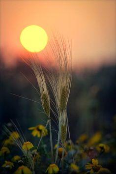 Summer evening in the fields