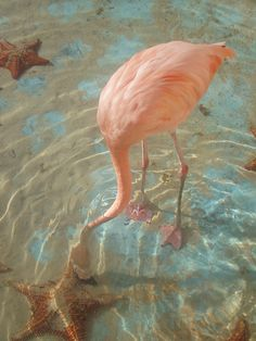 Flamingo - I had a chance to feed some of these birds at Busch Gardens in Tampa...it was AWESOME.