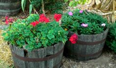 A Flower Picture Album To Stimulate A Great Container Garden Design