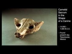 Camelid Sacrum in the Shape of a Canine - YouTube