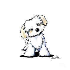 Quizzical Havanese Drawing  - Kim Niles
