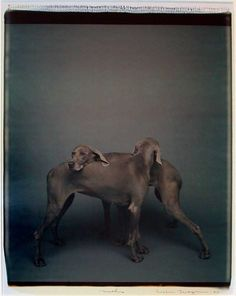 Things that Quicken the Heart: Animals in Art - William Wegman