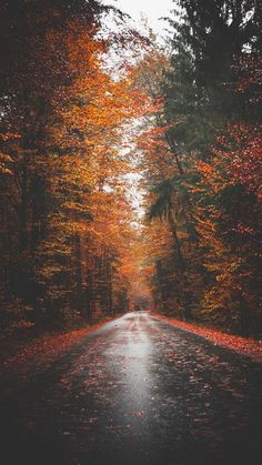 Wallpaper Iphone - Autumn road - - Wallpapers World Wallpaper Marvel, Fall Wallpaper, Nature Wallpaper, Wallpaper Backgrounds, Beautiful Wallpaper, Iphone Wallpaper Trees, Rain Wallpapers, Forest Wallpaper, Phone Wallpapers