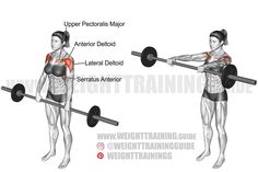 Exercise: Barbell front raise. Target muscle: Anterior Deltoid. Synergists: Lateral Deltoid, Clavicular (Upper) Pectoralis Major, Serratus Anterior, Middle and Lower Trapezius. Mechanics: Isolation. Force: Push. Best Shoulder Workout, Shoulder Exercises, Deltoid Workout, Front Raises, Barbell, Weight Training, Gym, Muscles, Workouts