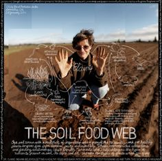 soil food web.