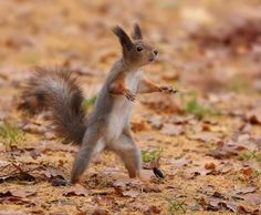 Squirrel doing Tai Chi. (Carry Tiger) And Return To The Mountain