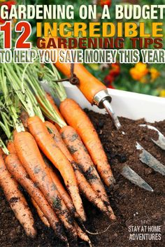 Starting a garden doesn't have to cost a lot of money. These tips for gardening on a budget will help you stay on track of your gardening finances.
