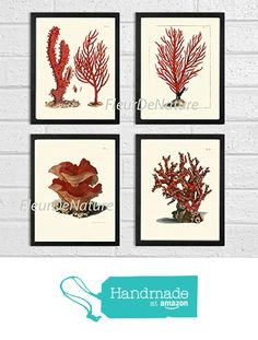 Coral Set of 4 Prints Antique Beautiful Red Corals Sea Ocean Marine Nature Home Room Decor Wall Art Unframed from LoveThePrint https://www.amazon.com/dp/B018RDV5VE/ref=hnd_sw_r_pi_dp_0HO9xbSER5MRC #handmadeatamazon