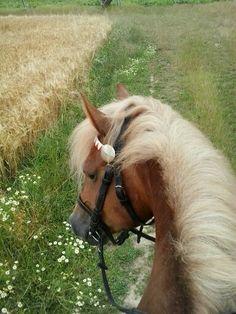 heavy horse <3