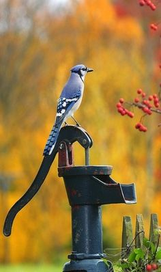 Well With Blue Jay On Handle