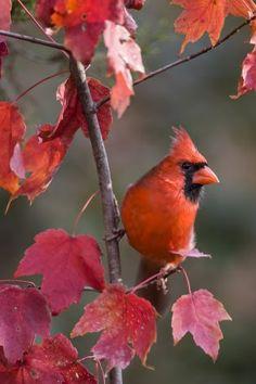 Beautiful Red Bird!