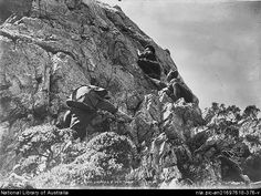 Climbers ascending Cradle Mountain, Tasmania (unknown date but probably around 1930). Stephen Spurlng.