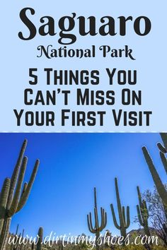 Saguaro National Park is one of the most beautiful places in Arizona and should be on everybodys bucket lists Planning an itinerary for your family vacation can be a chal. Arizona Road Trip, Arizona Travel, Arizona National Parks, Hiking With Kids, Tucson Arizona, Travel Activities, Best Hikes, Future Travel, Mexico Travel