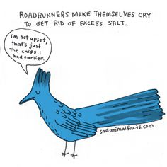I've got some bad news about roadrunners.