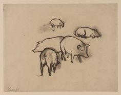 Pablo Picasso Pigs, Charcoal on paper, 213 x 273 mm, © The Courtauld Gallery, London Picasso Sketches, Art Picasso, Picasso Drawing, Picasso Paintings, Drawing Sketches, Art Drawings, Drawing Board, Georges Braque, Animal Art Prints