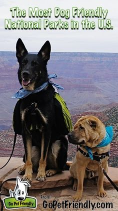 Planning your next vacation? These are the most dog friendly national parks in the U.S.