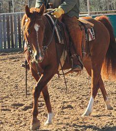 Legendary horseman Dick Pieper's advice on starting colts. Good stuff!