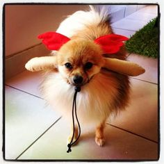 Such a cutie pie little doggy! Enter your pet to win a share of R101 000! #SouthAfrica only. #Pet competition. mymostbeautiful.com/