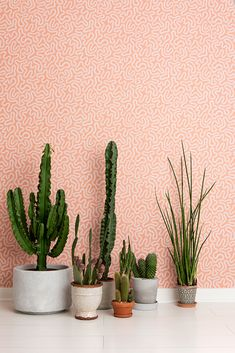 Coral Peach Blush Wallpaper Diverse and beautifully mesmerising, coral provides shelter and creates an environment to help marine life thrive. Blush Wallpaper, Wallpaper Paste, Peach Blush, Marine Life, Designer Wallpaper, Cactus Plants, Delicate, Coral