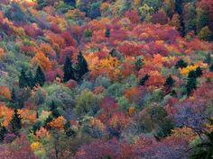 Jesenji mozaik Tare planina Tara Srbija autumn mosaic Serbia by Jovan Jaric