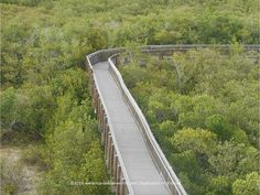 A view of the boardwalk at gorgeous Weedon island Preserve in #StPetersburg Florida