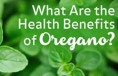 Manfaat Daun Oregano untuk Kesehatan dan Kecantikan - http://bibitbunga.com/blog/manfaat-daun-oregano-untuk-kesehatan-dan-kecantikan/