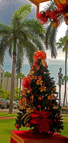 Christmas tree in the tropics, Aruba, Caribbean Caribbean Christmas, Tropical Christmas, Beach Christmas, Coastal Christmas, Noel Christmas, Beautiful Christmas, All Things Christmas, Christmas Lights, Christmas Decorations