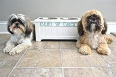 one on right looks just like my dog...Jake