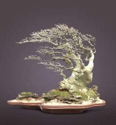 "Bonsaï battu par le vent - ""Fukinagashi"" BONSAI More At FOSTERGINGER @ Pinterest"