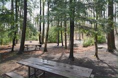 Sauble Falls Provincial Park, Camping in Ontario Parks Ontario Parks, Campsite, Outdoor Furniture, Outdoor Decor, Picture Video, Plants, Pictures, Photos, Camping