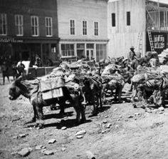 Leadville pack train, ca 1880-85 :: Western History