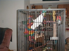 ~ 160919 Collection Children Vintage Exotic Pet Bird Toy Europet Bird Cage Pink Ladder Bell Pets Design Decor