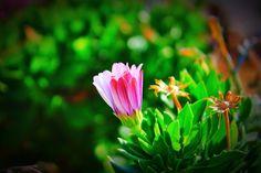 Flower!!!