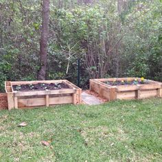 Raised garden beds made from pallets.