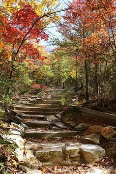 Walking Path At Hanging Rock State Park By Becky Brandyberry