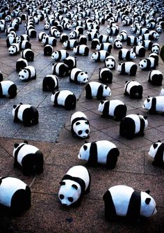 Panda awareness project. 1600 paper mache pandas in France and Switzerland. So adorable:)