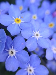 Macro photography of small blue flowers by D Partyka.